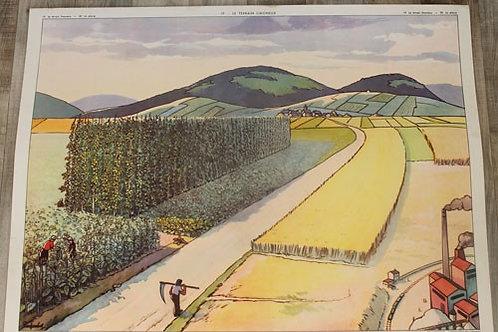 Affiche scolaire La plaine / Le terrain limoneux