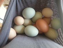 Fresh Eggs from Seneca Treehouse