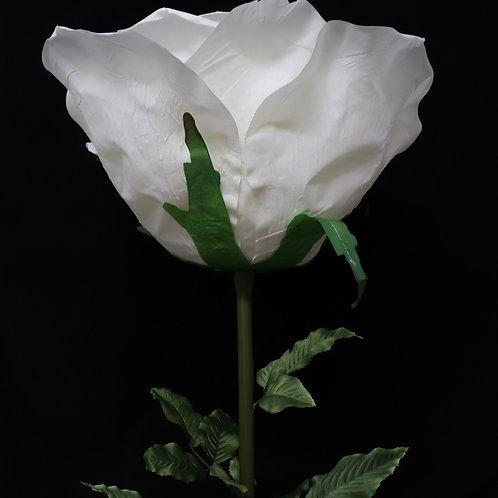 Giant Rose - Cream