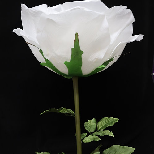 Giant Rose - White