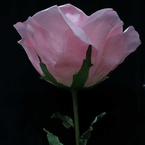 Giant Rose - Pink