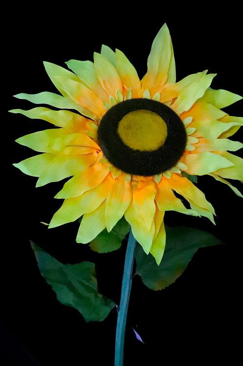 """Giant Sun Flower 42"""""""