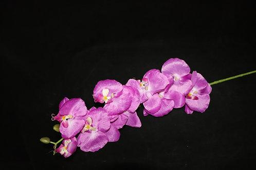 Dk Purple Cheap Orchid