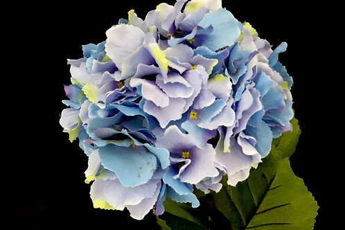 Long Stem Hydrangea Blue