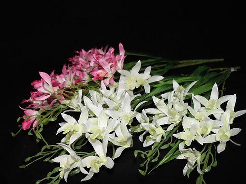 Oncidium Orchid Bunch