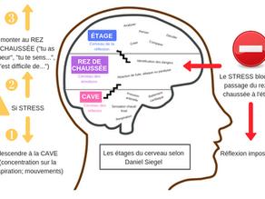 Les étages du cerveau