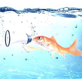 Fish%20with%20a%20megaphone_edited.jpg