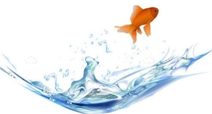 Fish splash_edited.jpg