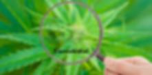 Receptra_Naturals_What_Is_CBD_Cannabidio
