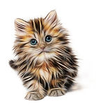 kitten-1582384_960_720.jpg