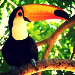 Pantanal Tukan