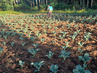 REBORN FARM UPDATES