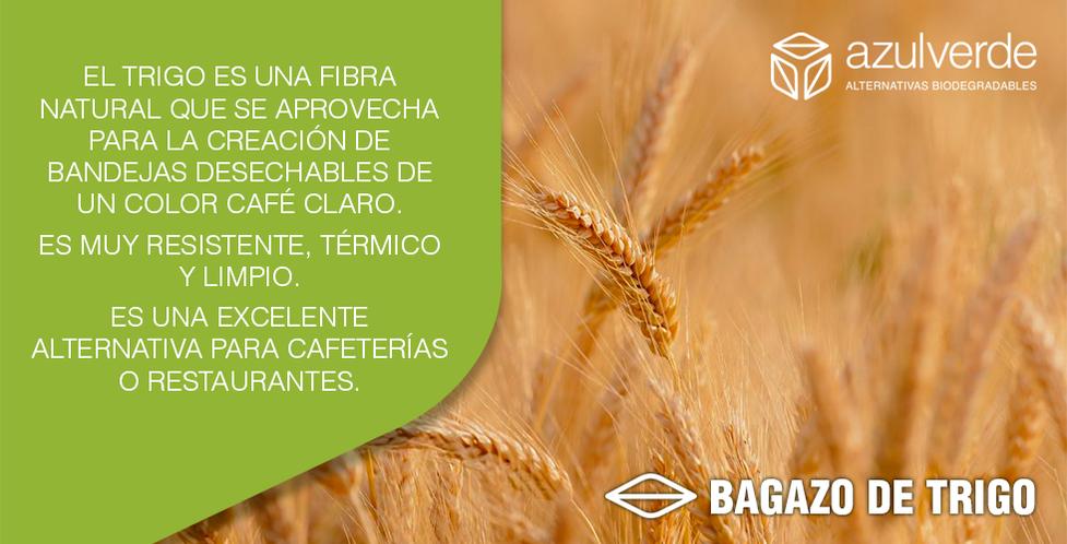 bagazo-trigo.png