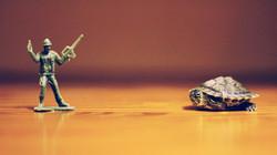 Soldier - Turtle