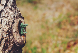 Soldier - Tree