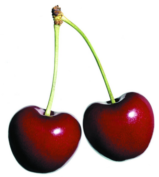 Biting the poisoned cherry - why the appeals process for school exams is so unfair