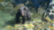 Black Bear_Wildlife Adventure Tour.jpg