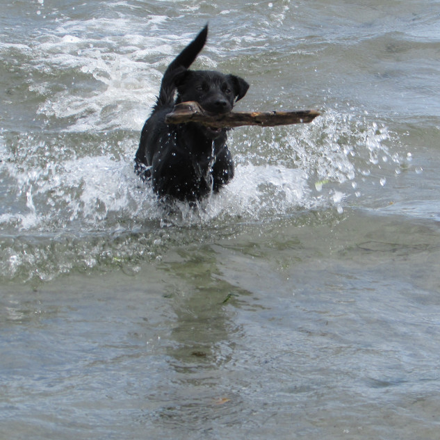 Bring your dog to the beach!