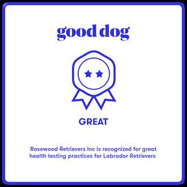 Good_Dog.png