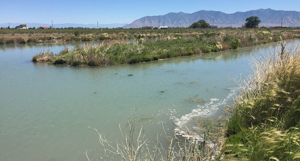 Swim-by Pond