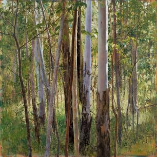 Forest Edge, Spring Morning 2020.jpg