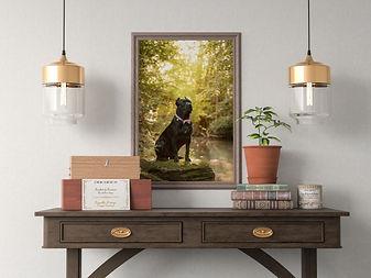 framed dog photograph