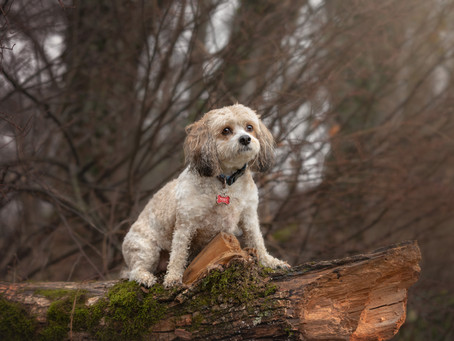 Does your dog photography session need props?
