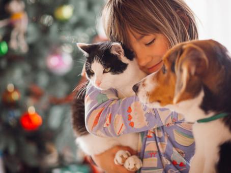 As vantagens de se ter um animal de estimação