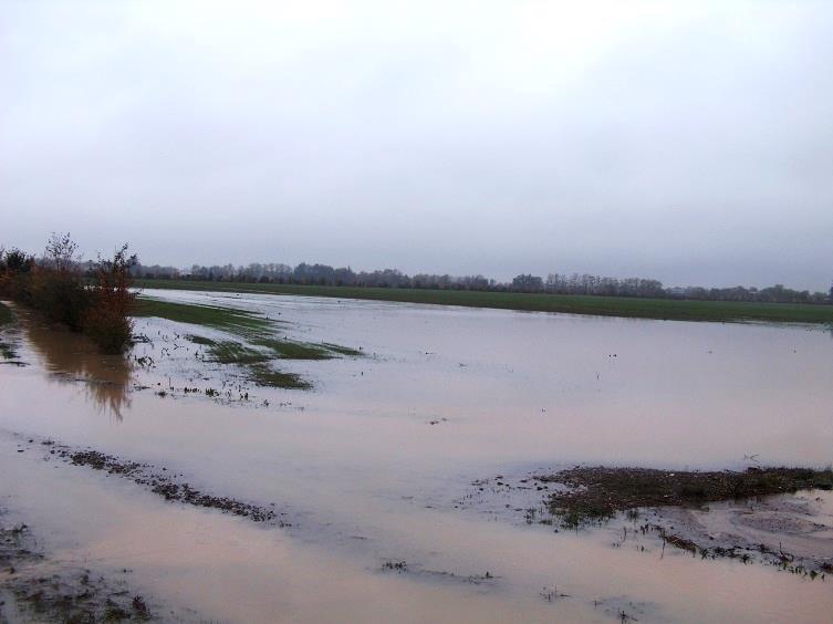 Piena novembre 2010, campo allagato