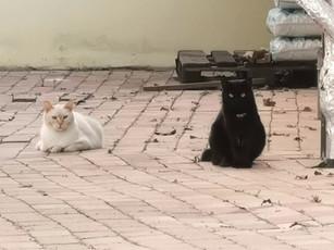Il gatto è ovunque