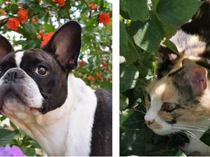 Come cane & gatto