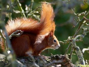 La geografia degli scoiattoli