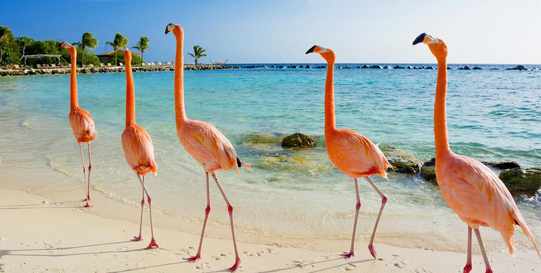 flamingo beach.jpg