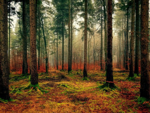 Weekly update: German forests at risk, 'British variant' spikes COVID infection rates