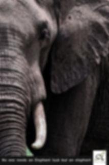 ElelephantAD1.jpg