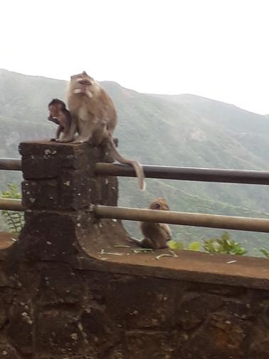 Opičí rodinka