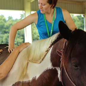 Horse adjustment, horse chiropractor, horse chiropractic, equine chiropractic, Equilibrium Vet Services