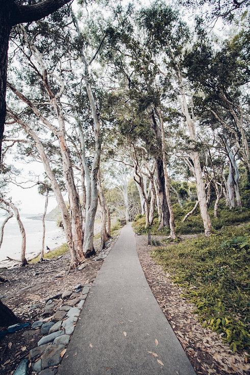 Stock_eucalyptus path.jpg