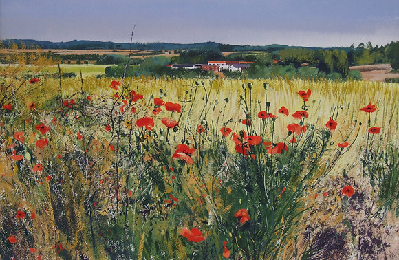 Poppy Field near Higham