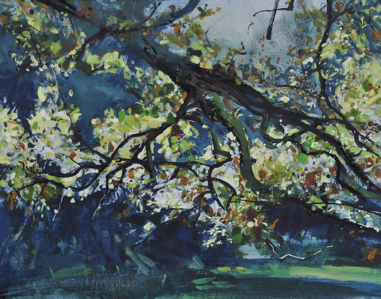 Autumn light through Beech tree - SOLD