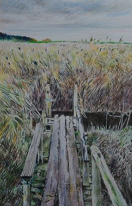 Bridge through the Reeds