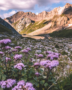 Berner Alpen/Schweiz