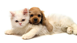 dogs-and-cats-pictures-together-hd-cute-dogs-and-cats-sleep-together-photos--706-wallpaper-wallpaper