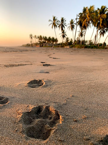 Nica Paw Prints in Sand.jpg