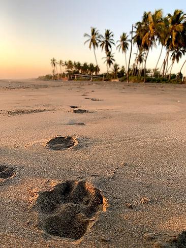 Nica Paw Prints in Sand.jpg