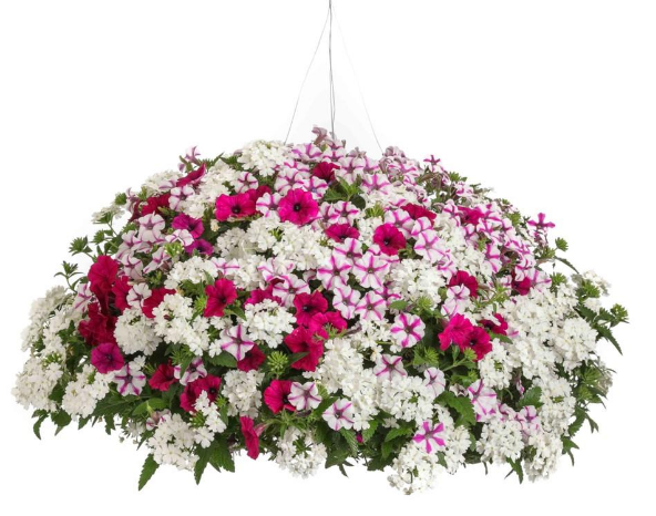 Blind Love PW Hanging Basket.png