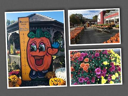 Harvest Days Collage 2019.jpg