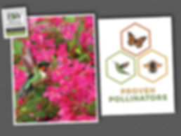 Proven Pollinators Collage.jpg