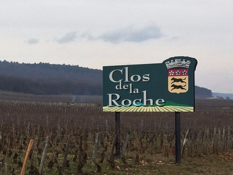 """2006 Clos de la Roche from LLM - """"It's hard to think of many wines of its vintage that can"""