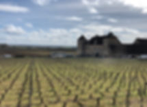 Burgundy winery